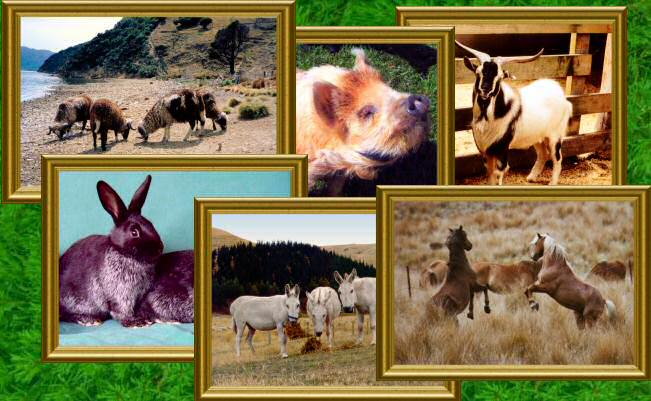 Rare Breeds Notecards